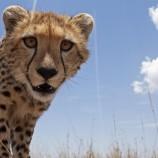 photos_of_wildlife_in_africa