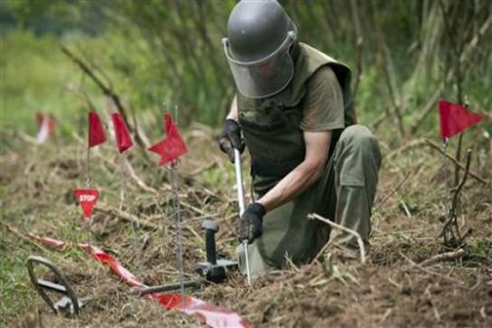 croatia-landmine-bees-2