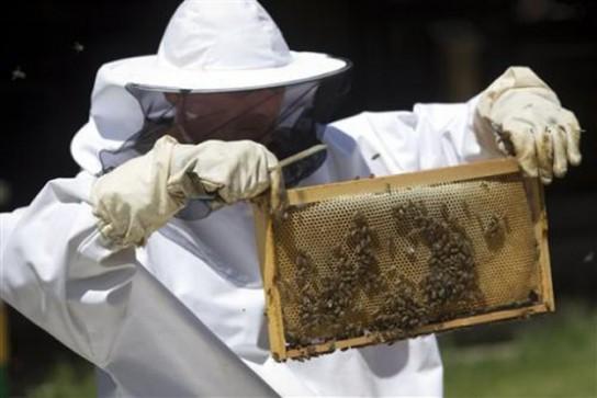 croatia-landmine-bees