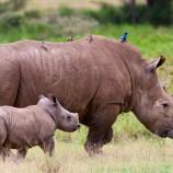 1682329-poster-1280-rhino