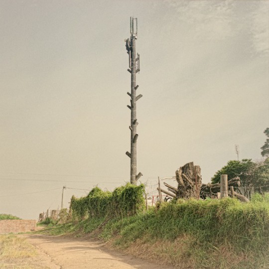 4-Cellphone-Towers-Disguised-as-Trees