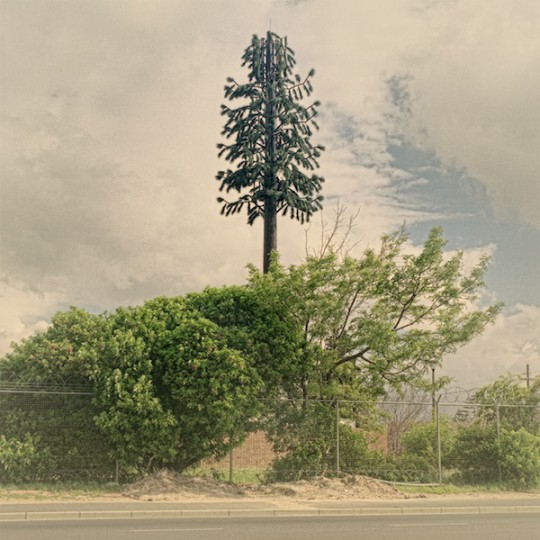 5-Cellphone-Towers-Disguised-as-Trees