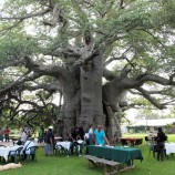 Big-Baobab-bar-South-African-Toursim3