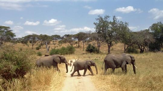 Elephants_edited-1