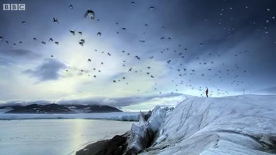 Penguins bbc
