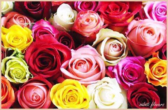 afrika_rose_open.jpg
